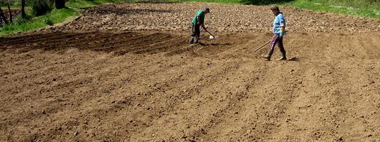 campo-di-patate.jpg